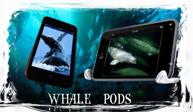 Whale Pods