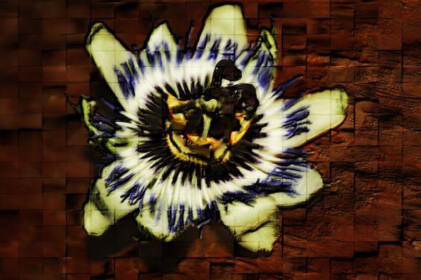 Passion Flower Macro 2TXW