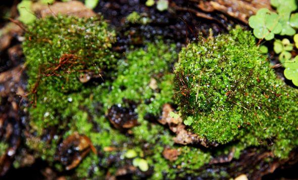 Moss Moments 2