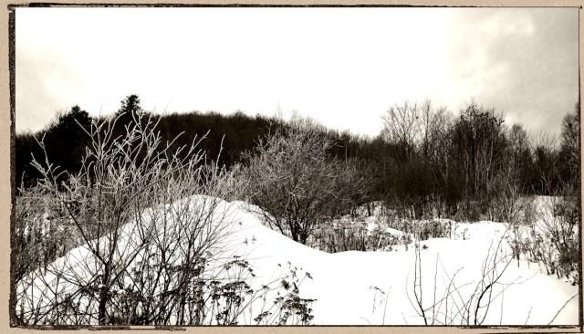 hoar-frost-december-23-hf1