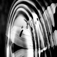 stamens in monochrome